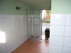 Pensionshunde 3d 005